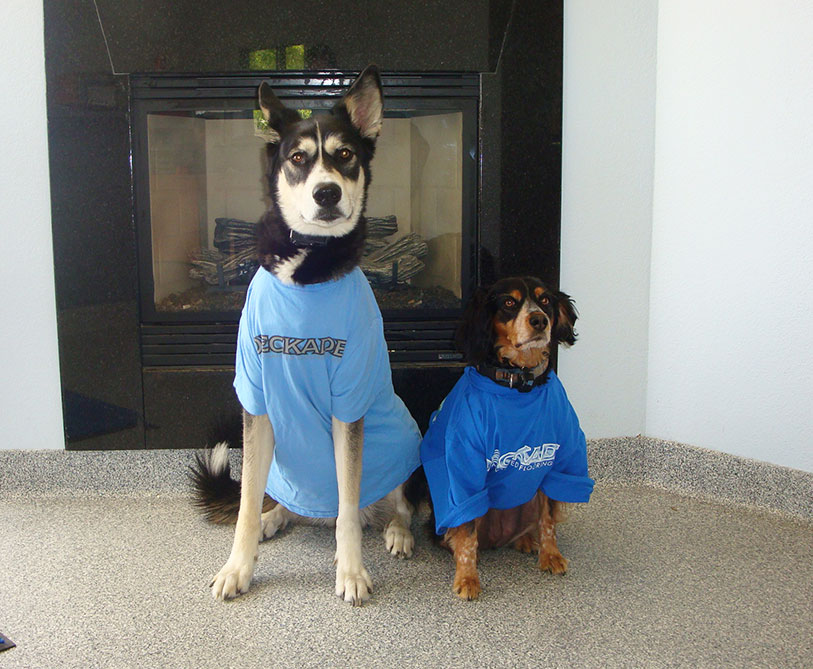 Meet-the-team-Office-Dogs